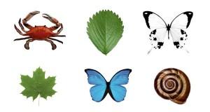 تقارن در طبیعت